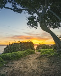 A vertical shot of a narrow pathway with green plants and a tree near the sea under the sunset sky