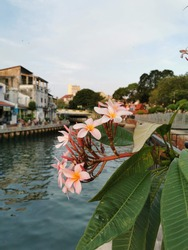 a vertical shot of a plumeria blunt with thick leaves by the river and houses