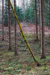 A vertical shot of a slanted colorful tree-stem in the woods