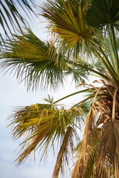 A vertical shot of a small bird perched on a palm tree branches