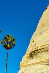 A vertical shot of a tall palm tree near a big eroded stone