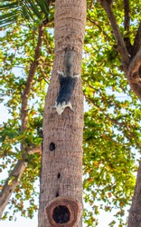 A vertical shot of a Thai squirrel on a tree in Thailand on a bright day
