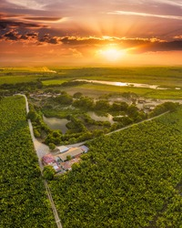 A vertical shot of field crops covered in greenery during a breathtaking sunrise in Mao, the Dominican Republic