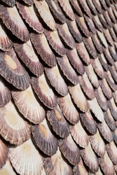 A vertical symmetrical shot of evenly laid out seashell texture background