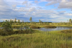 A very beautiful marsh lake covered with bright red grass and shrubs in the warm summer evening. Yelnya swamps in Belarus near the city of Miory. Gorgeous colors of nature