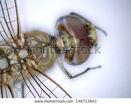 """A Very Close up view of parts of a Dragonfly taken with a Digital Microscope. Some 5680 different species of dragonflies (Odonata) are known in the world today.  Aka """"The Devils Darning Needle"""""""