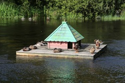 A very cute floating duck house in the middle of the river, at Cong, County Mayo, Ireland.