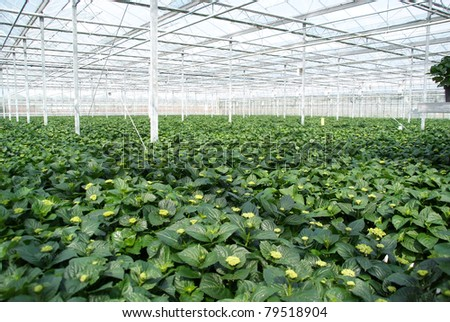 A very full greenhouse with green plants.