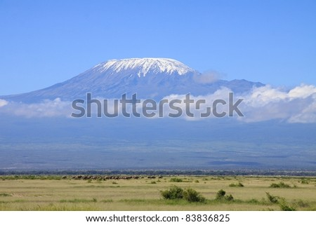 A very large herd of elephants move into Amboseli National Park, Kenya to feed, with mount Kilimanjaro rising above the savanna in the background