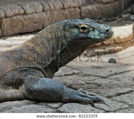 a very large lizard with the islands of Komodo - Bali, Indonesia