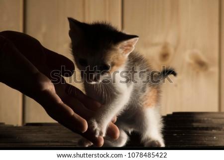 a very little cat #1078485422