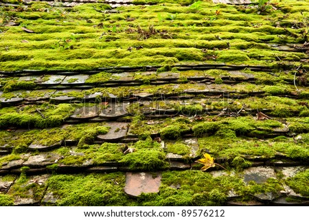 A very old roof which is covered by a moss and leaves
