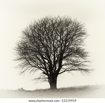 A very sharp and detailed photo of a lonely tree on a field