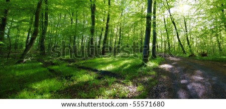 A very sharp and detailed photo of the famous saturated Danish forest in springtime