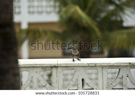 A very small sized bird resting on a stone banister.