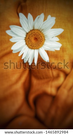 A very SPECIAL capture of flower with a nice combined background texture,perfect to express any idea or communicate any message or to use it as design for many many ideas and uses