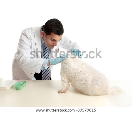A vet attends to and inspects a pet  dog