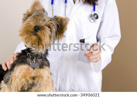 A veterinarian giving a dog an examination