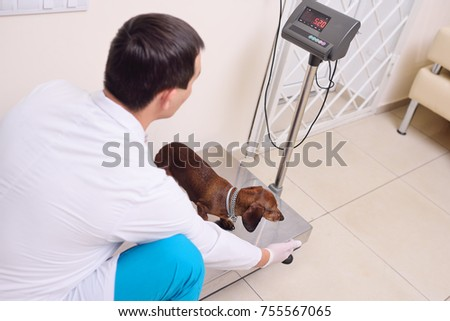 a veterinarian weighs a dog in a modern veterinary clinic