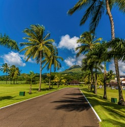 A view along a palm tree line road towards the volcano, Mount Pelee in Martinique