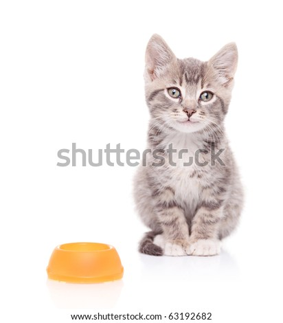 A view of a cat and an empty food bowl next to it isolated on white background