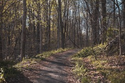 A view of a hiking trail leading through the forests of Patapsco Valley State Park near Ellicott City, Maryland.