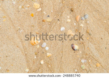 A view of a sand full of shells #248885740