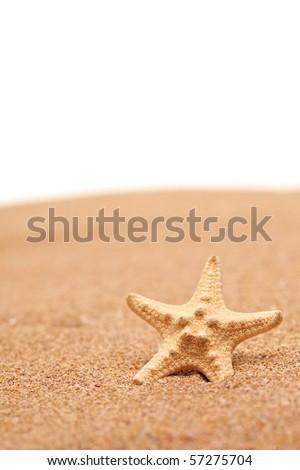 A view of a sea star on a sandy beach isolated on white background