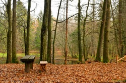 A view of a small wooden bench and table standing in the middle of a dense forest or moor with a small pond nearby and colorful withered leaves scattered all over the place on a sunny autumn day