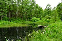A view of a wooden platform, marina, or pier located on the edge of a swamp, river, or lake with its coasts being completely covered with shrubs, grass, herbs, and other flora seen in Poland in summer