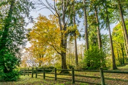 A view of autumn trees and a fence at Saltwater State Park in Des Moines, Washington.