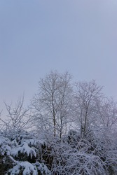 A view of bare leafless trees covered with snow against the blue-grayish sky