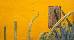 a view of giant cactus in front of a yellow house wall with a brown wooden closed window, lanscape of the succulent againts colorful wall, mexico cityscape
