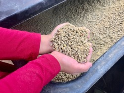 A view of kid hand holding the animal feed from black feed container