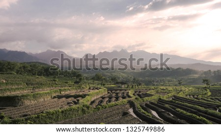 a view of rice fields with the foreground of the Anjasmoro mountains taken in the East Java . #1325749886