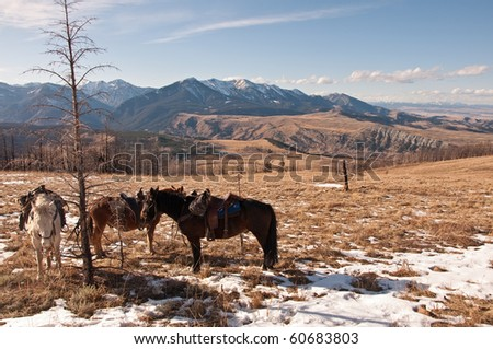 A view of the Gallatin National Forest and West Boulder river basin with horses in the foreground near McLeod, Montana