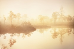 A view of the lake and young pine tree forest in a morning fog at sunrise. Natural mirror. Pure golden light. Idyllic autumn landscape. Kemeri national park. Environmental conservation in Latvia