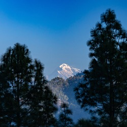 A view of the Trisul mountain peak on the Himalayan range framed with pine trees on either sides