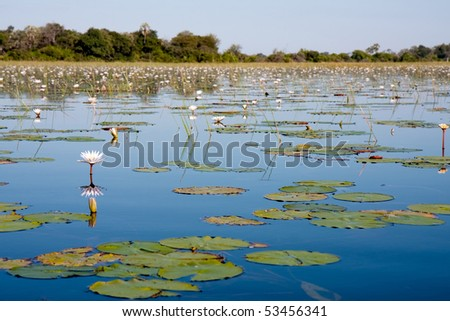 A view over the water lilly filled Okavango Delta in Botswana.