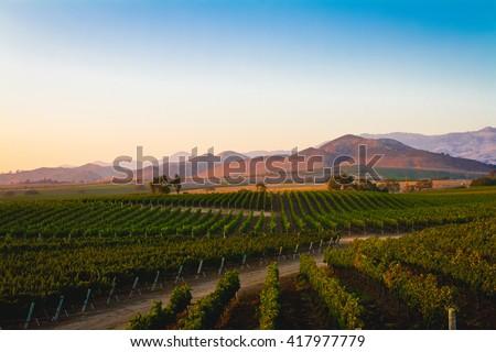A vineyard in Santa Ynez, California. #417977779