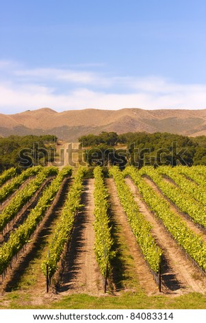 A vineyard near Paso Robles in southern California.