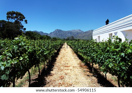 A vineyard / winery in South Africa