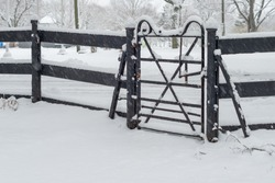 A vintage black gate made of wrought iron hangs on two black wooden fence posts at winter. There's now on the ground, the wood fence and metal gate. Tall trees grow in the backyard covered in snow.