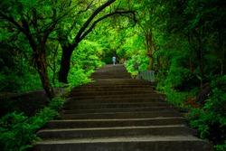 A walk to the Heaven. Photo taken in Yelagiri hills, Tamilnadu, India
