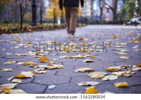 A walking man in the park which plenty of fallen yellow leaves on the ground, low-angle view