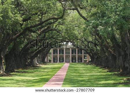 A walking of trees leads to and old plantation