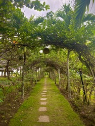 a walkway with plant arche