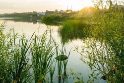 A warm sunny evening on the lake. Sunset on a village lake surrounded by cattails and willow bushes.