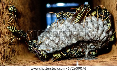 A wasp is any insect of the order Hymenoptera and suborder Apocrita that is neither a bee nor an ant. The Apocrita have a common evolutionary ancestor and form a clade