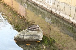 a water bird sitting on a rock in the water ditch